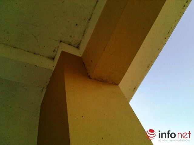 Kiến ba khoang bò từ bên ngoài vào leo lên trần nhà và gây nguy hại cho người.