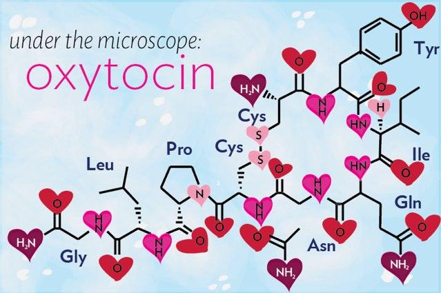 Nồng độ oxytocin tăng rất cao trong cực khoái làm tăng sự gắn bó giữa đôi bạn tình