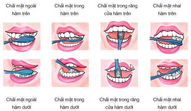 Chải răng đúng cách: chải thứ tự mặt ngoài, mặt nhai và mặt trong răng