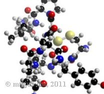 Oxytocine hormone của lòng chung thủy