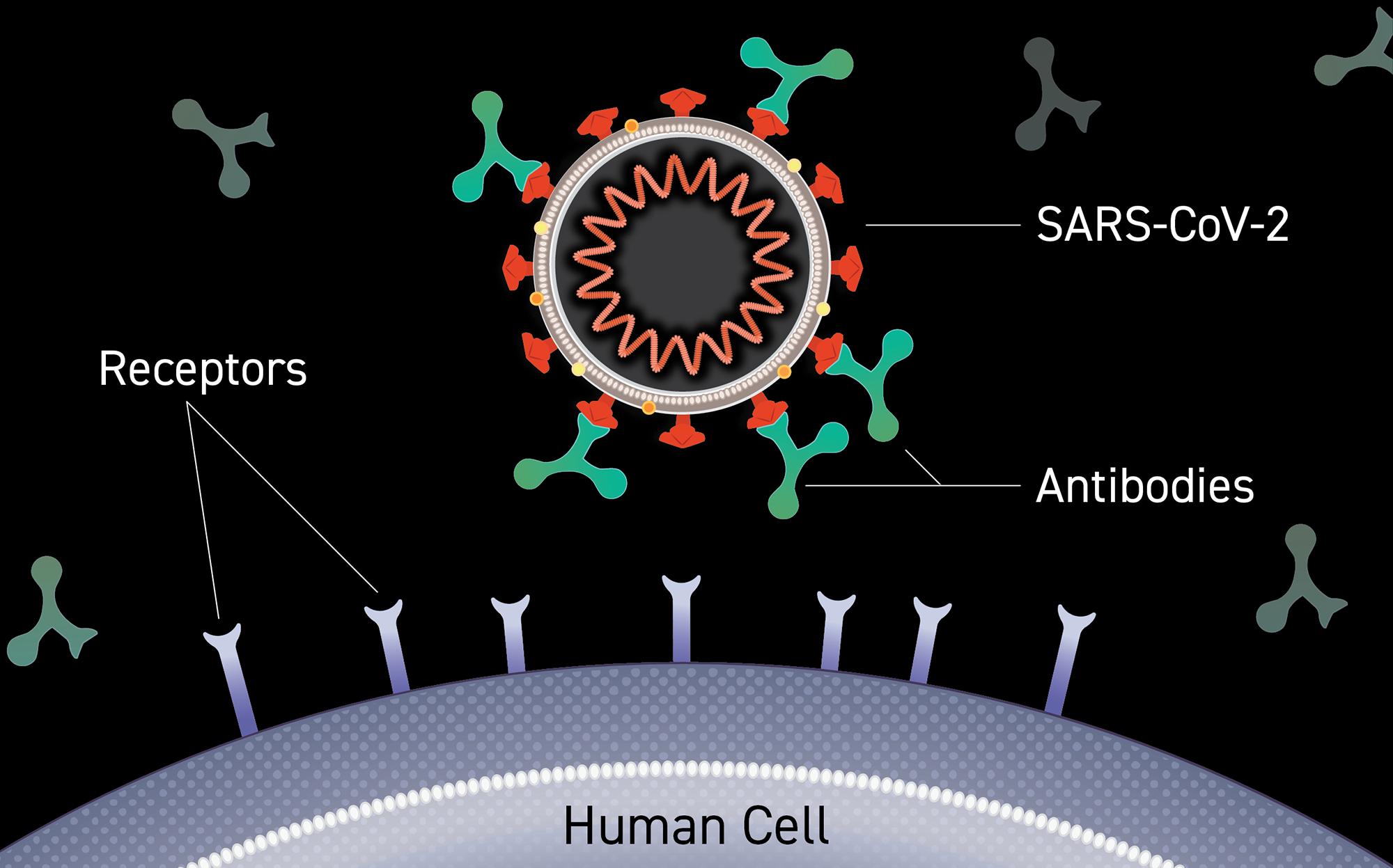 WHO ban hành hướng dẫn về kháng thể đơn dòng trong điều trị COVID-19 - Ảnh 1.