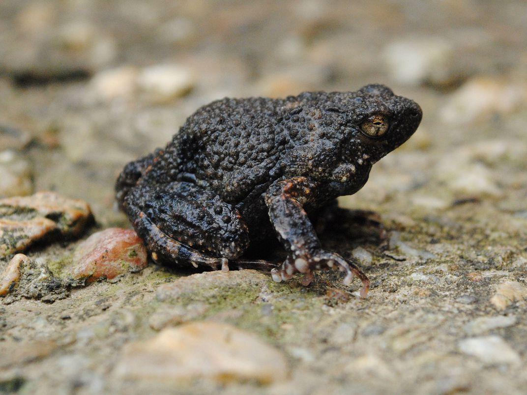 Tiềm năng của bọt ếch dẫn truyền thuốc đặc trị các bệnh qua da - Ảnh 3.
