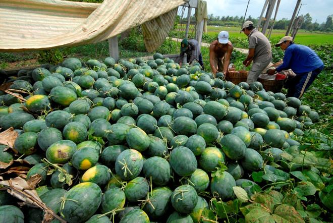 Ưu tiên cao nhất cho lưu thông tiêu thụ nông sản và các sản phẩm nông nghiệp  - Ảnh 1.