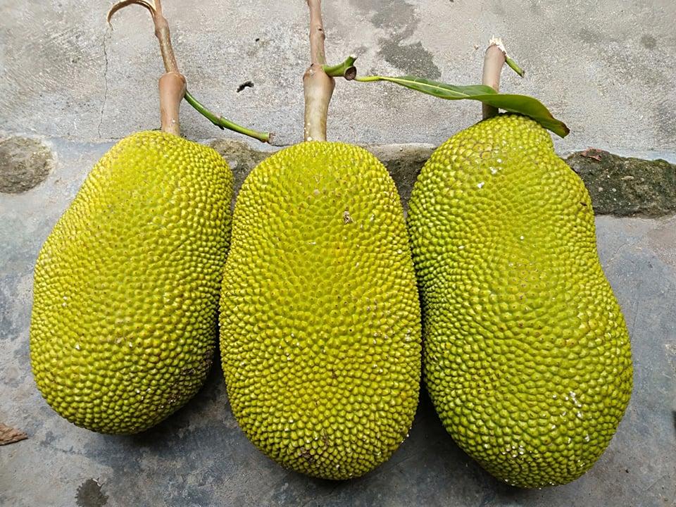 Mít Thái giảm giá vì ngừng xuất khẩu, người trồng khóc vì chỉ đủ tiền phân bón - Ảnh 2.