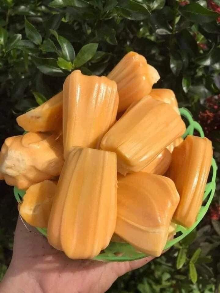 Mít Thái giảm giá vì ngừng xuất khẩu, người trồng khóc vì chỉ đủ tiền phân bón - Ảnh 5.
