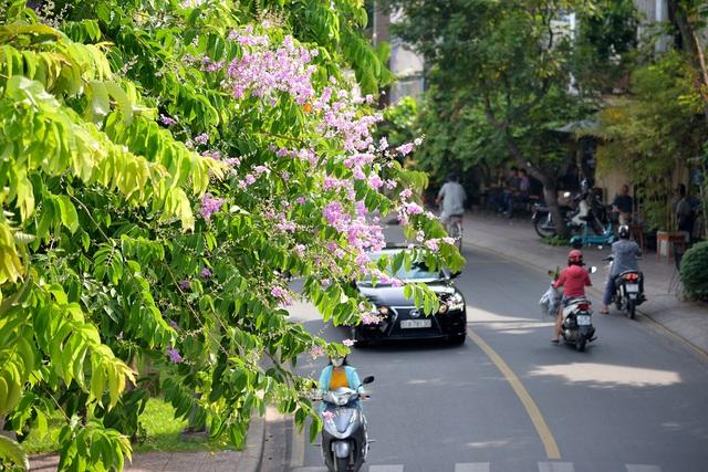 Thư Sài Gòn (số 30): Nhà văn Sài Gòn làm gì trong 100 ngày giãn cách vừa qua - Ảnh 2.