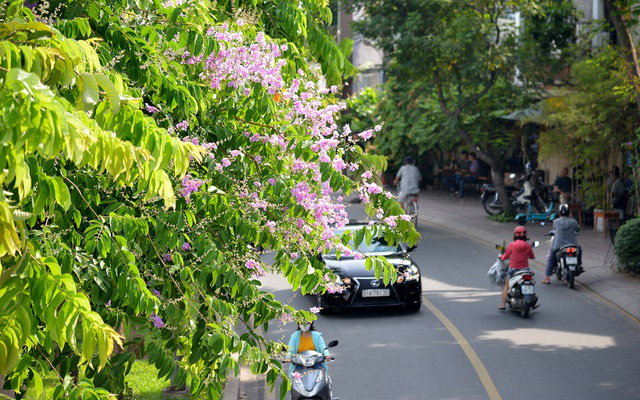 Thư Sài Gòn (số 30): Sài Gòn, những trang viết không ngủ yên