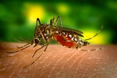Ai dễ bị muỗi đốt?  1