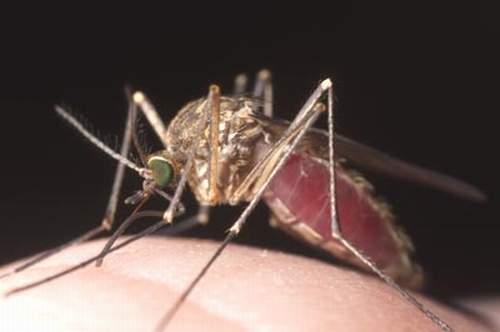 Chẩn đoán bệnh sốt rét nhờ ánh sáng và nam châm 1