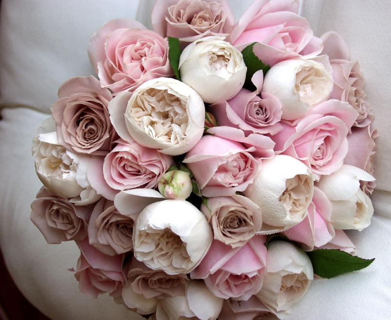 Hoa hồng - Biểu tượng của tình yêu