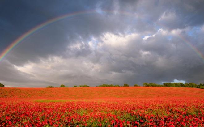 Cầu vồng trên cánh đồng hoa anh túc