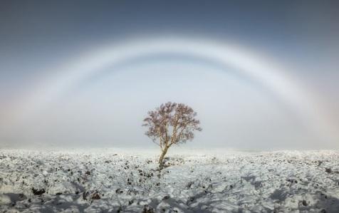 Cầu vồng sương mù (cầu vồng trắng)