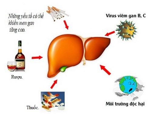 Uống nhiều rượu, mắc viêm gan B, C, hút thuốc, môi trường độc hại, sử dụng quá nhiều thuốc… là những nguyên nhân gây tăng men gan.