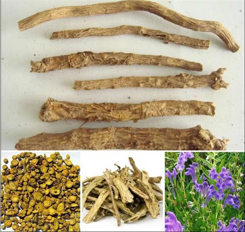 Hoàng cầm là vị thuốc trong bài Đạt nguyên ẩm trị ôn dịch và sốt rét.