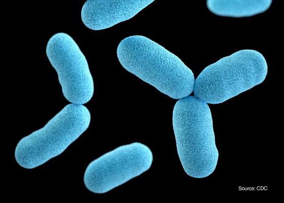 Vi khuẩn Corynebacterium diphtheriae gây bệnh bạch hầu.