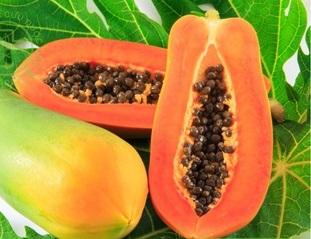 Bộ phận dùng làm thuốc là quả, lá, rễ và nhựa đu đủ.