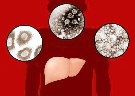 Có nhiều loại virus gây viêm gan.