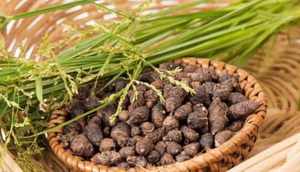 Hương phụ (củ gấu) là vị thuốc trị đau bụng do lạnh, đầy bụng...