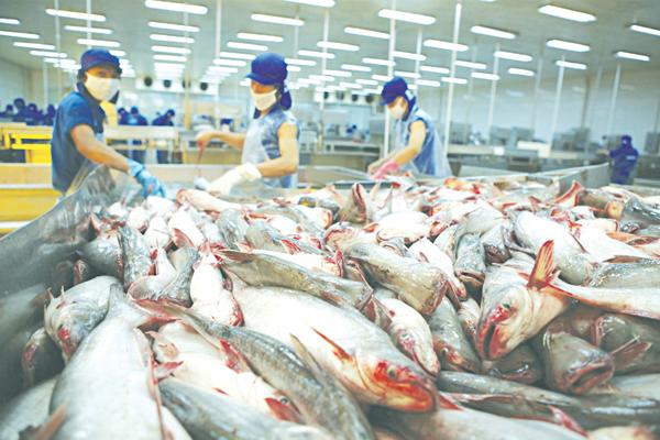 Cá giàu dinh dưỡng, ngừa bệnh tật