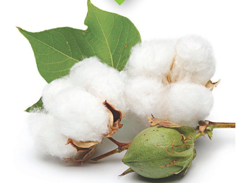 sơi bông cotton có khả năng thấm hút tốt