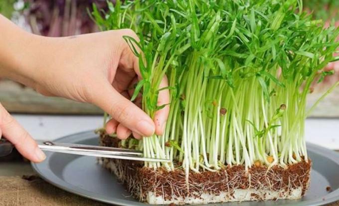 rau củ không được ăn sống