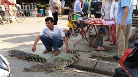 Mang cá sấu sống bày bán ngay cổng chợ 1