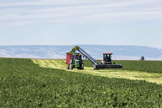 Bên trong nông trại hữu cơ làm nên những sản phẩm Amway chất lượng - Ảnh 1.