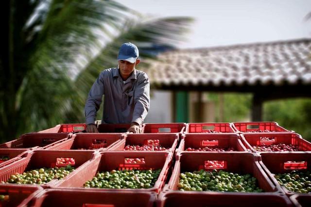 Bên trong nông trại hữu cơ làm nên những sản phẩm Amway chất lượng - Ảnh 3.