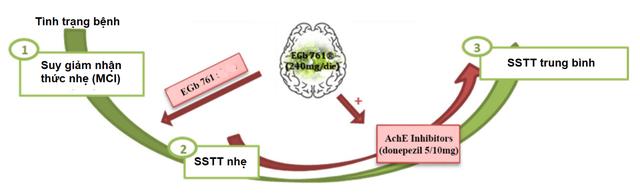 Vai trò Ginkgo Biloba (Egb761) trong suy giảm nhận thức nhẹ - Ảnh 3.