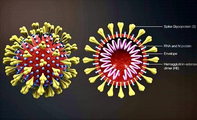 Cách xử trí các ca bệnh đột quỵ cấp liên quan tới COVID-19 - Ảnh 3.