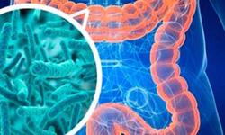 Men vi sinh - lợi ích và nguy cơ