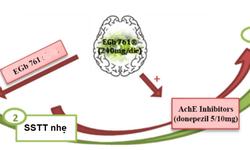 Vai trò Ginkgo Biloba (Egb761) trong suy giảm nhận thức nhẹ