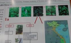 Giáo sư dược học Italy thử nghiệm trị bệnh xương, ung thư từ cây Chay của Việt Nam