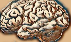 Bệnh loạn dưỡng chất trắng não: Các thể bệnh và triệu chứng