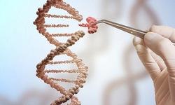 Sửa chữa ADN phôi thành công