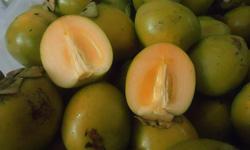 Tắc ruột khi ăn trái hồng giòn sai cách