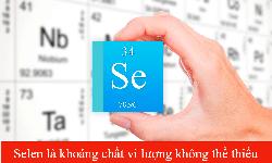 Selenium yếu tố quan trọng cho hệ miễn dịch khỏe mạnh