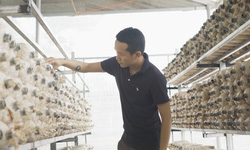 Hành trình phát triển chuỗi giá trị nấm linh chi Quảng Nam