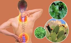Những bài thuốc dành cho người gai cột sống