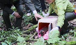 Bạn muốn tận thấy tái thả động vật hoang dã về rừng ?