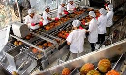 Phục hồi sản xuất nông nghiệp, 'chạy đua' thực phẩm Tết