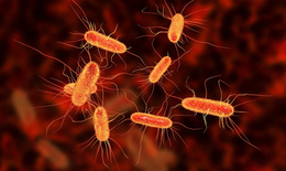 (Test) Phương pháp mới chống lại vi khuẩn kháng thuốc kháng sinh