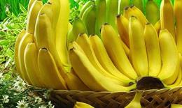 Chuối – Thực phẩm bổ dưỡng, vị thuốc hay trị nhiều bệnh