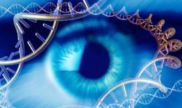 Đưa liệu pháp gen vào điều trị các bệnh ở mắt