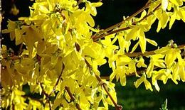 Đau răng cũng có thể chữa khỏi bằng cỏ cây, hoa lá