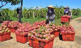 Hàng trăm tấn nông sản ở các tỉnh, thành phía Nam gặp khó trong tiêu thụ