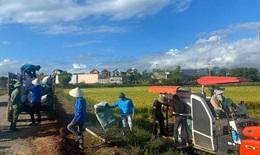 Quảng Bình: Giúp người dân vùng bị phong tỏa thu hoạch lúa, hoa màu
