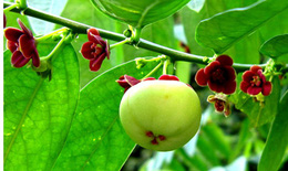 4 loại rau dưỡng phế âm giải nhiệt tà, chống tái phát cho người bệnh COVID-19