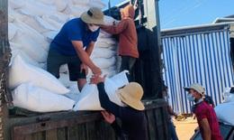Xuất cấp hơn 1.800 tấn gạo cho người dân tỉnh Quảng Nam, Quảng Ngãi bị ảnh hưởng bởi dịch COVID-19