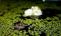 Tiềm năng của bọt ếch trong dẫn truyền thuốc đặc trị các bệnh qua da